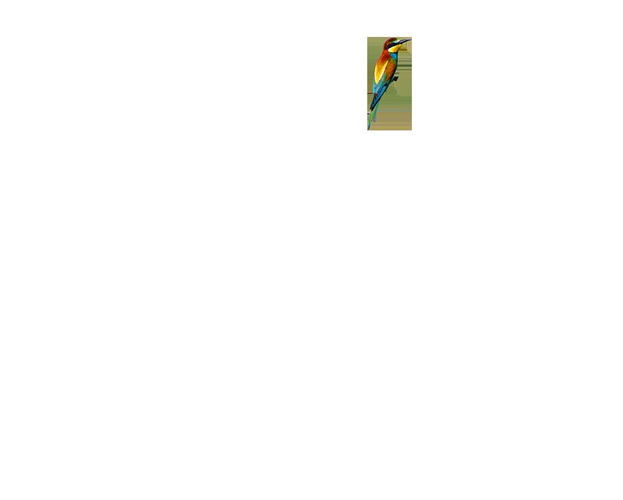 Antler Stag Bird