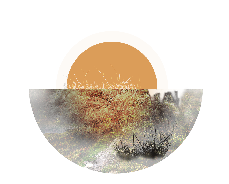 Antler Stag Background